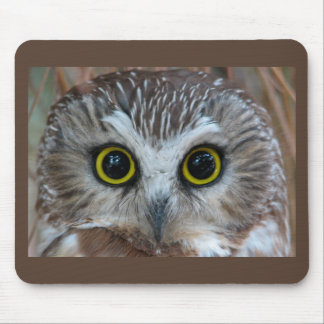 Northern Saw-whet Owl Close-Up Mousepads