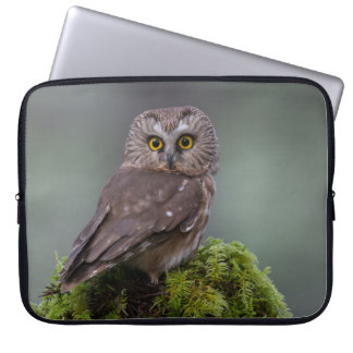 Northern Saw Whet Owl Computer Sleeve