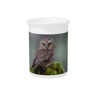 Northern Saw Whet Owl Drink Pitcher