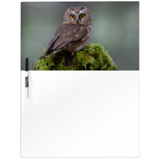 Northern Saw Whet Owl Dry Erase Board