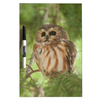 Northern Saw-whet Owl Dry Erase Boards
