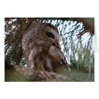 Northern Saw-Whet Owl Gifts and Apparel Card