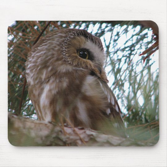 Northern Saw-Whet Owl Gifts and Apparel Mouse Pad