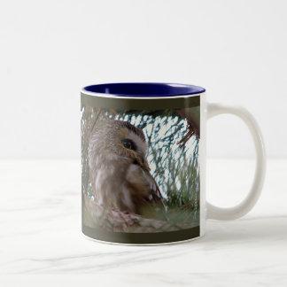 Northern Saw-Whet Owl Gifts and Apparel Two-Tone Coffee Mug