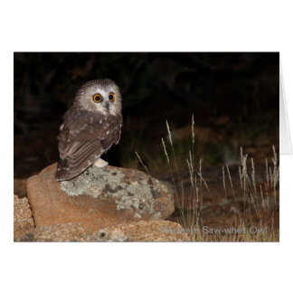 Northern Saw-whet Owl hunting at night Card