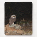 Northern Saw Whet Owl hunting at night Mouse Pad