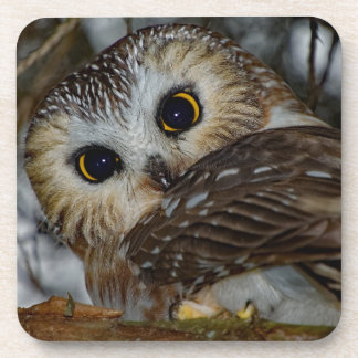 Northern Saw-whet Owl in a Tree Coaster