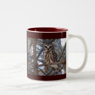 Northern Saw-Whet Owl in Pine Tree Coffee Mug