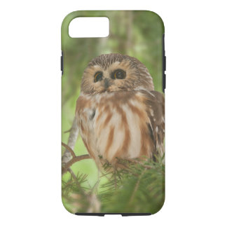 Northern Saw whet owl iPhone 8/7 Case