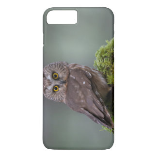 Northern Saw Whet Owl iPhone 8 Plus/7 Plus Case