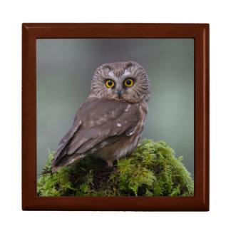 Northern Saw Whet Owl Jewelry Box