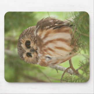 Northern Saw-whet Owl Mouse Pad