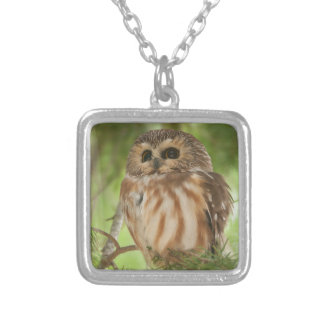 Northern Saw-whet Owl Necklace