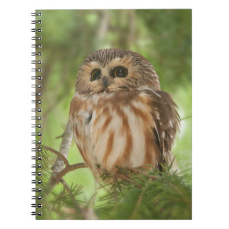 Northern Saw-whet Owl Notebook