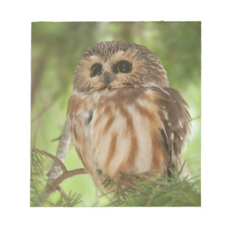 Northern Saw-whet Owl Notepads