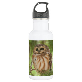 Northern Saw-whet Owl 18oz Water Bottle