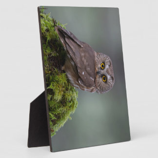 Northern Saw Whet Owl Plaque