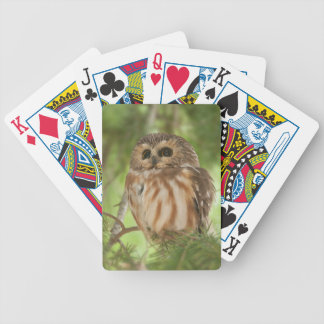Northern Saw-whet Owl Bicycle Poker Deck