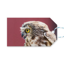 Northern Saw-Whet Owl Portrait Gift Tags