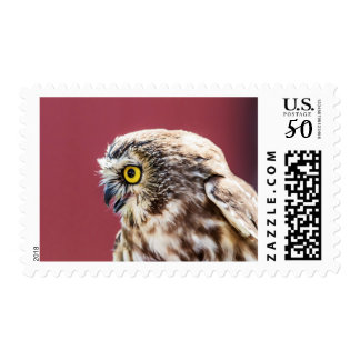 Northern Saw-Whet Owl Portrait Postage