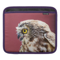 Northern Saw-Whet Owl Portrait Sleeve For iPads