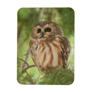 Northern Saw whet owl Rectangular Magnet