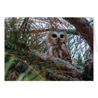 Northern Saw-Whet Owl with Huge Eyes Card