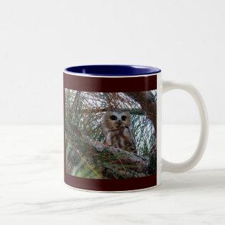 Northern Saw-Whet Owl with Huge Eyes Two-Tone Coffee Mug