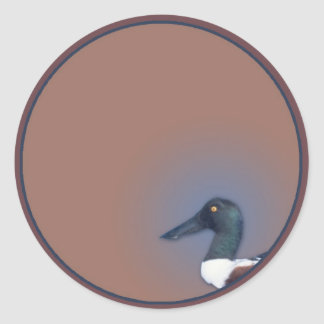 Northern Shoveler Classic Round Sticker