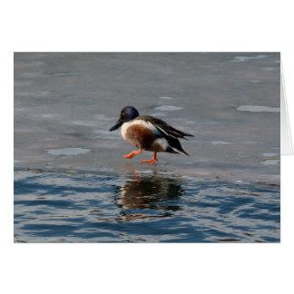 Northern Shoveler Duck Blank Notecard