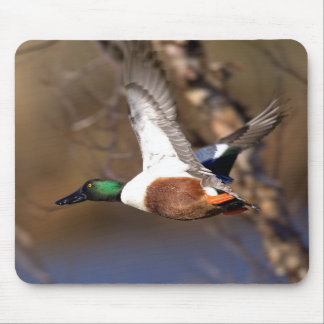 Northern Shoveler Duck Mousepad