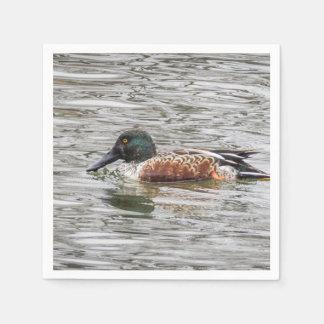 Northern Shoveler Ducks Napkin