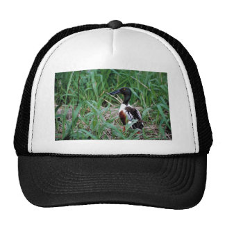 Northern shoveler hats