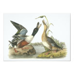 Northern Shoveler, John Audubon Personalized Announcement