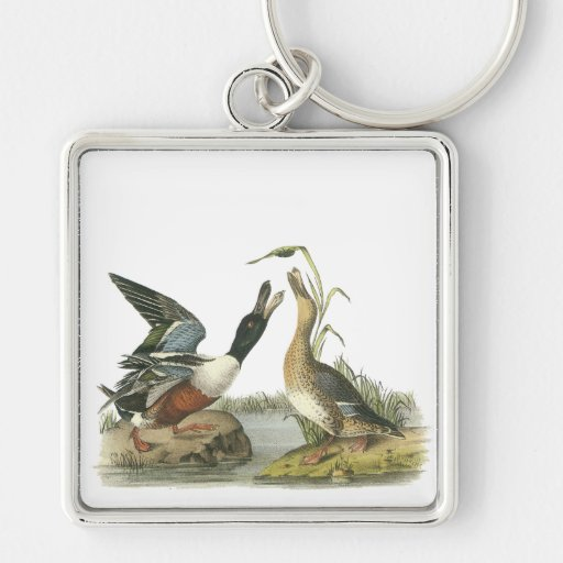 Northern Shoveler, John Audubon Keychain