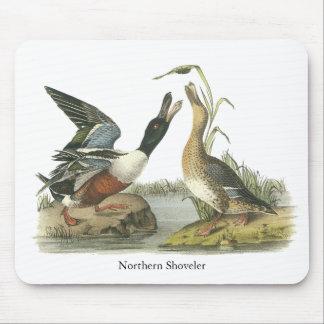 Northern Shoveler, John Audubon Mouse Pad
