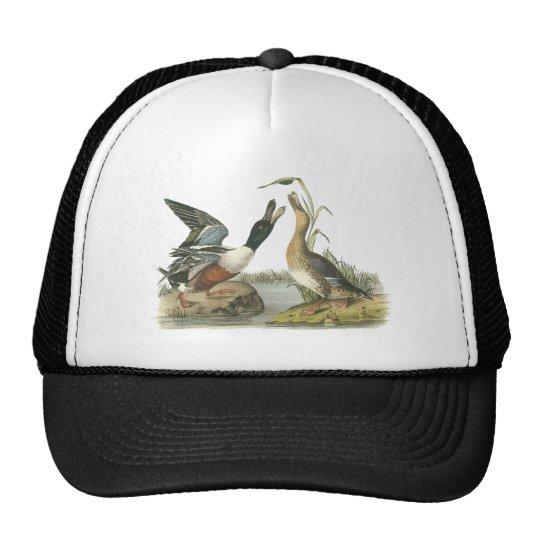 Northern Shoveler, John Audubon Trucker Hat