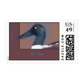 Northern Shoveler Postage Stamps