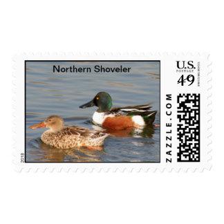 Northern Shoveler Postage Stamp