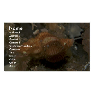 Northern siphon whelk (Penion adusta) Shell Business Cards