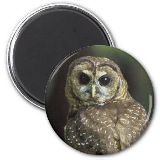 Northern Spotted Owl 2 Inch Round Magnet
