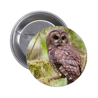 Northern Spotted Owl Pinback Buttons