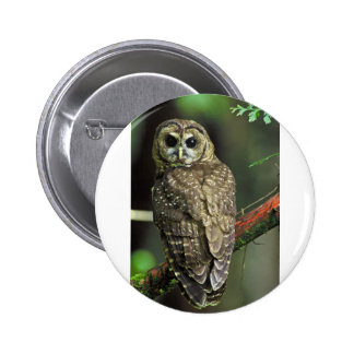 Northern Spotted Owl Pins