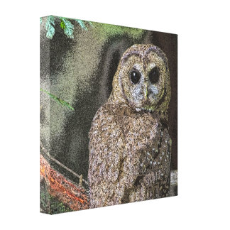 Northern Spotted Owl Canvas Wall Art 2