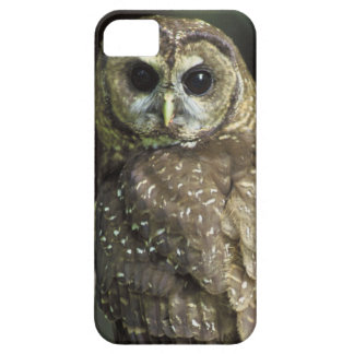 Northern Spotted Owl iPhone 5 Cases
