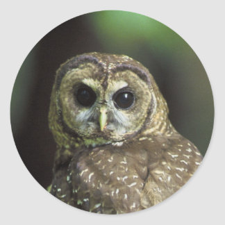 Northern Spotted Owl Classic Round Sticker