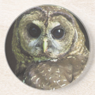 Northern Spotted Owl Coaster
