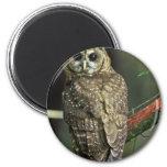 Northern Spotted Owl Fridge Magnet