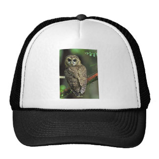 Northern Spotted Owl Mesh Hat