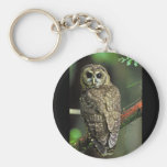 Northern Spotted Owl Key Chain